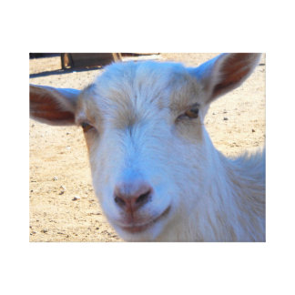Goat...smiling Stretched Canvas Prints