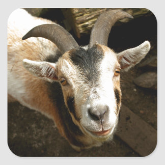 Goat Square Sticker