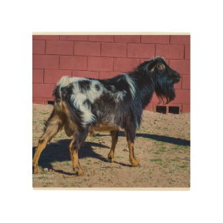 Goat Standing Wood Print
