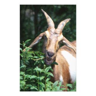 Goat Stationery