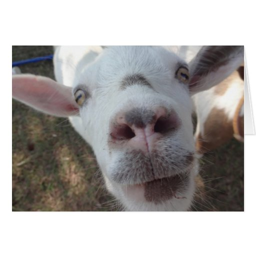 Goat Who Stared at Man Greeting Card