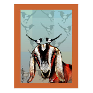 Goat with magpie fine art postcard