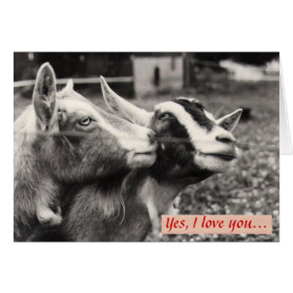 Goats in Love Valentine's Day Card