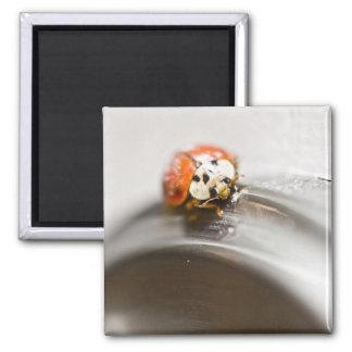 Godd luck square magnet