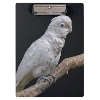 Goffin's Cockatoo Clipboard