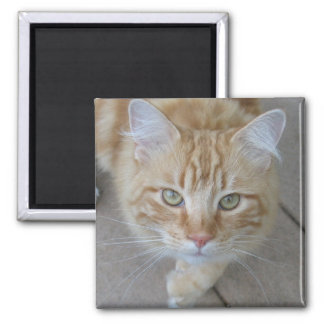 Going for a walk square magnet
