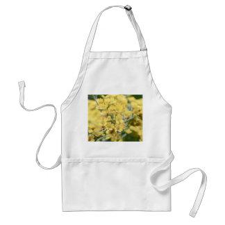 Gold Alyssum - Perennial Apron