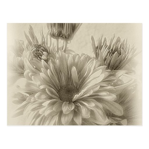 Gold and Brown Chrysanthemums 1 Antiqued Post Cards