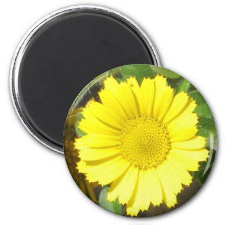Gold Coin 6 Cm Round Magnet
