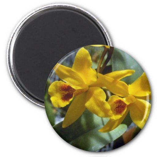 Gold Digger (Laeliocattleya) flowers Refrigerator Magnets