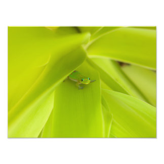 Gold Dust Day Gecko Photo Print