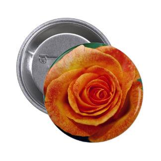 Gold Medal Grandiflora Rose Aroyqueli White flow Button