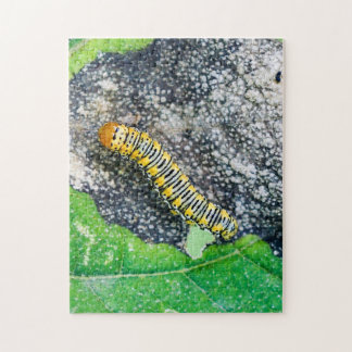 Gold Moth Caterpillar Puzzle