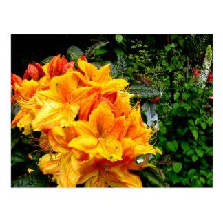 Gold Petals Postcard