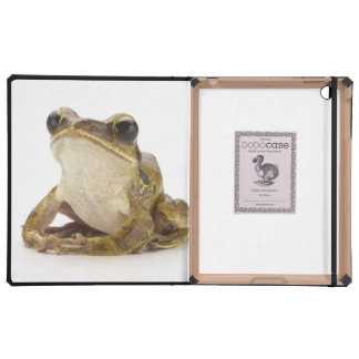 Gold tree frog iPad cases