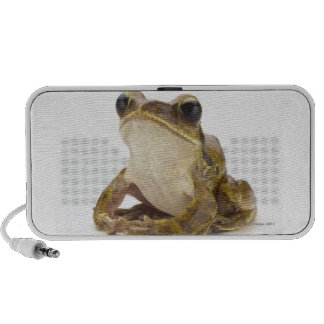 Gold tree frog speaker system