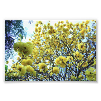 Gold Tree hawaii Photo Print