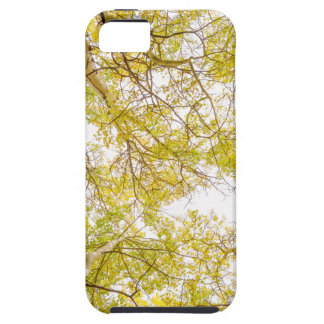 Golden Aspen Forest Canopy iPhone 5 Case
