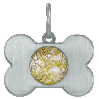 Golden Aspen Forest Canopy Pet Name Tag