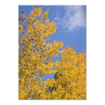Golden Aspen in Autumn Personalized Invitations