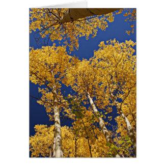 Golden Aspens Greeting Card