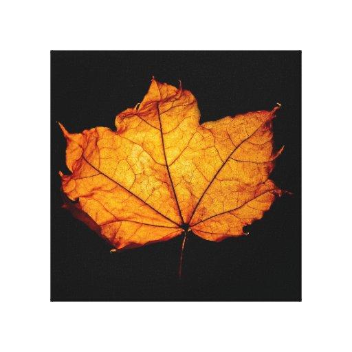 Golden Autumn Leaf Stretched Canvas Prints