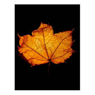 Golden Autumn Leaf Postcards