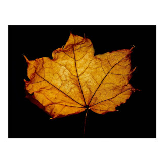 Golden Autumn Leaf Post Card
