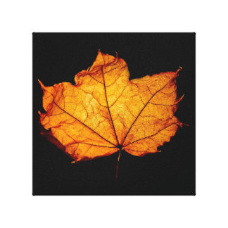 Golden Autumn Leaf Stretched Canvas Prints