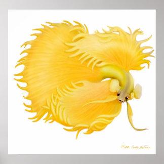 Golden Betta Fish Poster