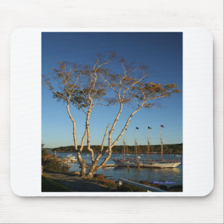 Golden Birch with ship Mouse Pads