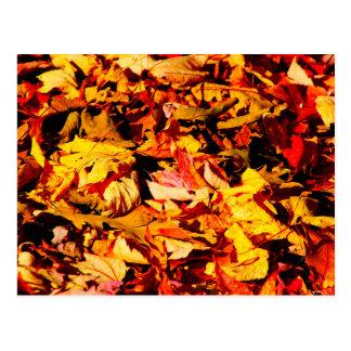 Golden Brown Autumn Leaves Postcard