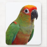 Golden-capped conure mouse pad