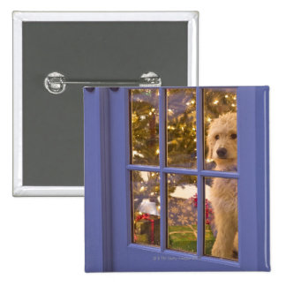 Golden Doodle puppy looking out glass door with 15 Cm Square Badge