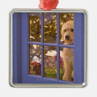 Golden Doodle puppy looking out glass door with Metal Ornament
