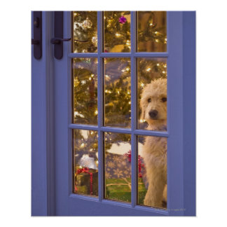 Golden Doodle puppy looking out glass door with Poster