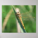 golden dragonfly print