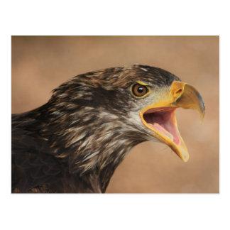 Golden Eagle Post Card