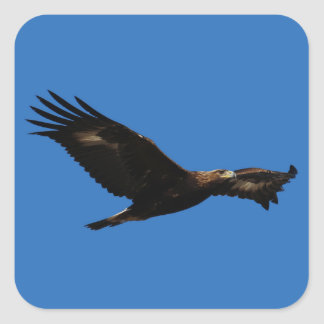 Golden Eagle Square Sticker