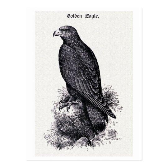 """""""Golden Eagle"""" Vintage Illustration Postcard"""