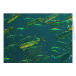 Golden Fish H Blank Greeting Card