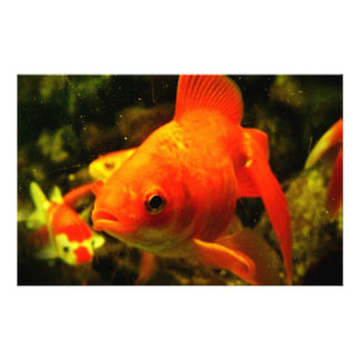 Golden fish stationery design