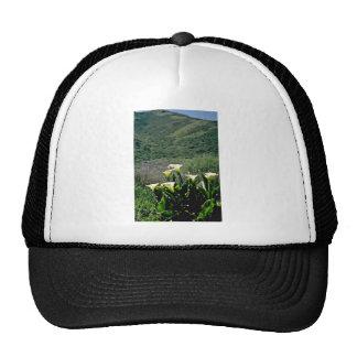 Golden Gate Nat'l Recreation Area - Calla Lilies P Mesh Hats