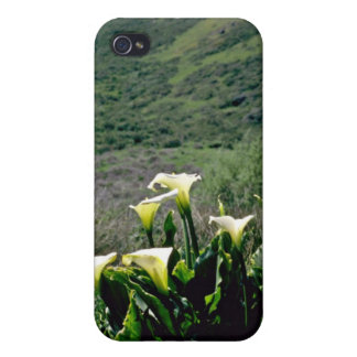 Golden Gate Nat'l Recreation Area - Calla Lilies P iPhone 4 Cases