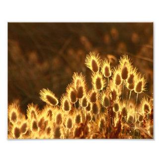 Golden Glow Photo Print