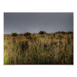 Golden Grasses Photo Art