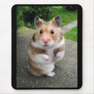 Golden hamster mouse pad