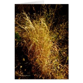 Golden Harvest Card