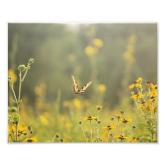 Golden Hour Butterfly Photo Print