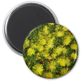 Golden Ice Plant Yellow Flowers 6 Cm Round Magnet